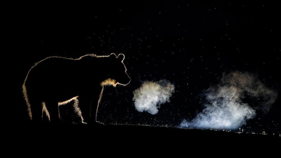 A silhouette of a bear and the condensation from its breath