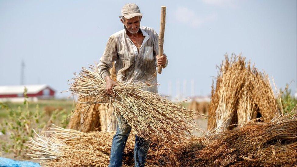 susam, poljoprivrednik