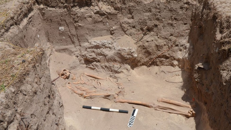 A skeleton can be seen at a dig in English Harbour