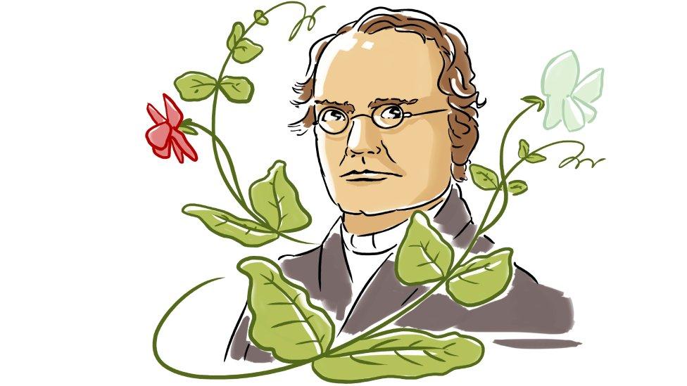 Ilustración de Mendel con arvejas