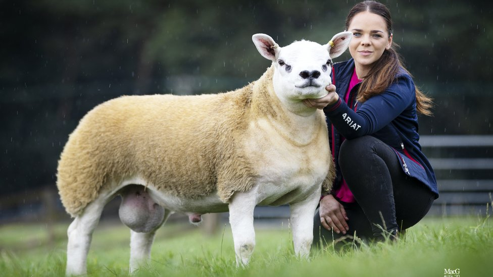Prize sheep Double Diamond with a handler