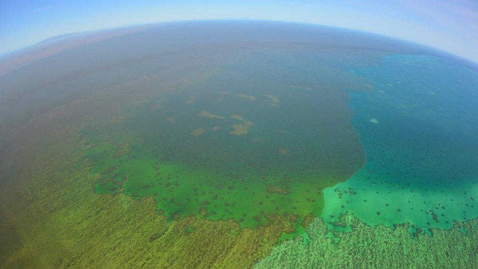 Great Barrier Reef di Queensland