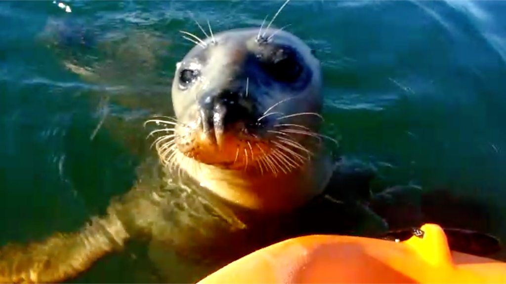 Baby seal filmed playing with kayakers on Hampshire river
