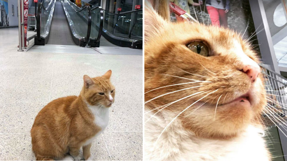 Social Media Star Cat Garfield Killed In Sainsbury S Car Park Accident Bbc News