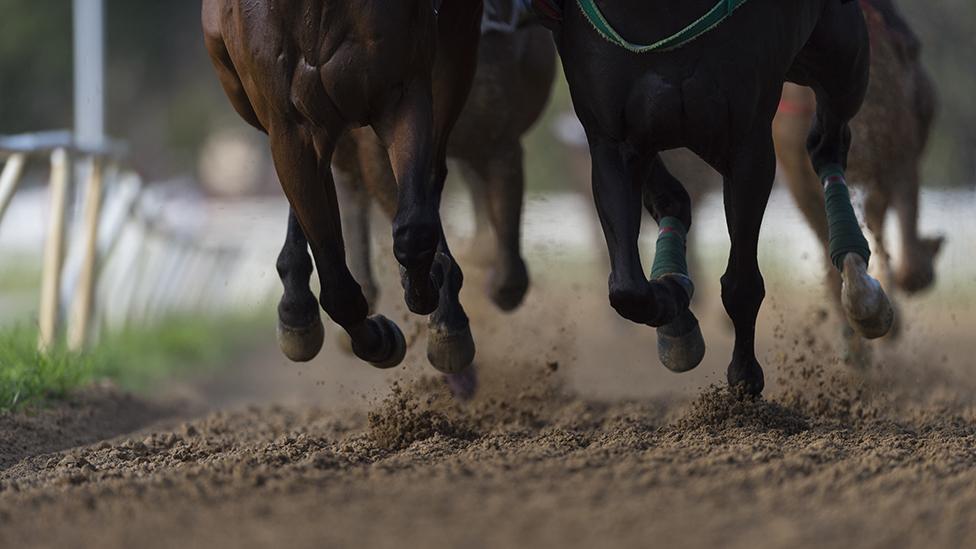 Piernas de caballos durante una carrera