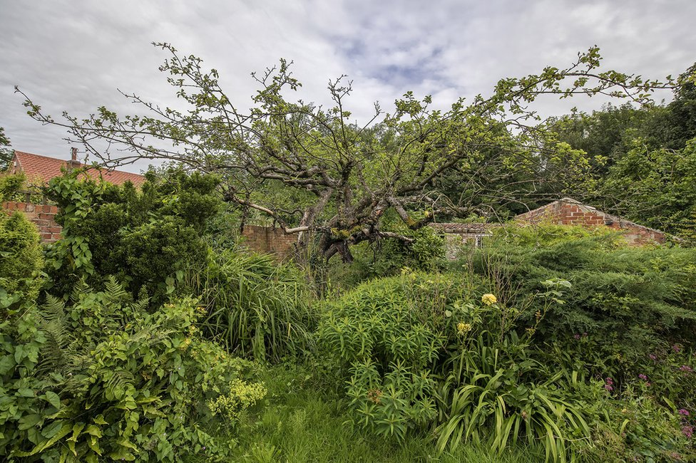 Garden with original Bramley apple tree
