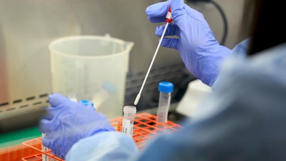 Cientista analisa coronavirus