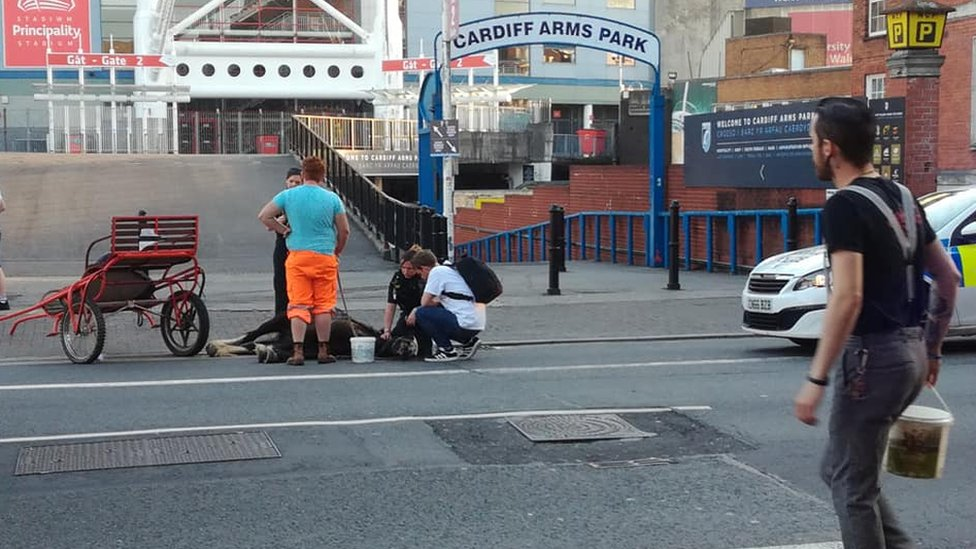 A horse collapsed on Westgate Street