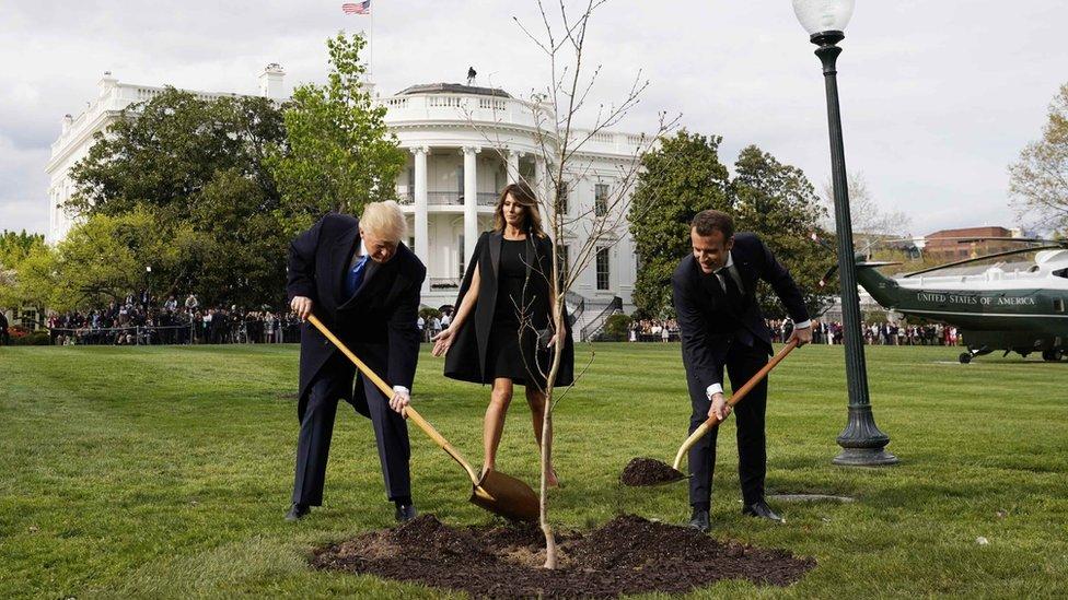 Predsednik Tramp i predsednik Makron sade drvo prijateljstva