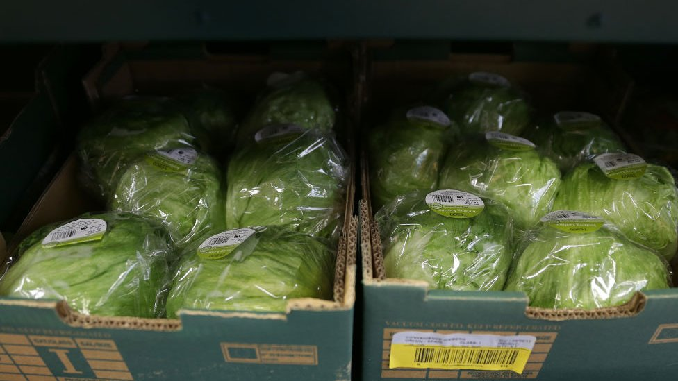 Lettuces in a supermarket