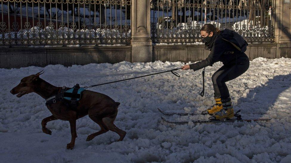 Женщину на лыжах тянет собака на заснеженной улице Мадрида.