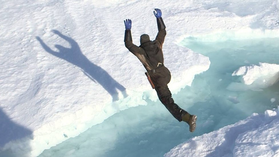 A sealer jumping over a gap in the ice flow
