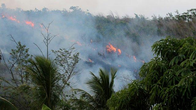 Rainforest fire (c) Alexander Lees
