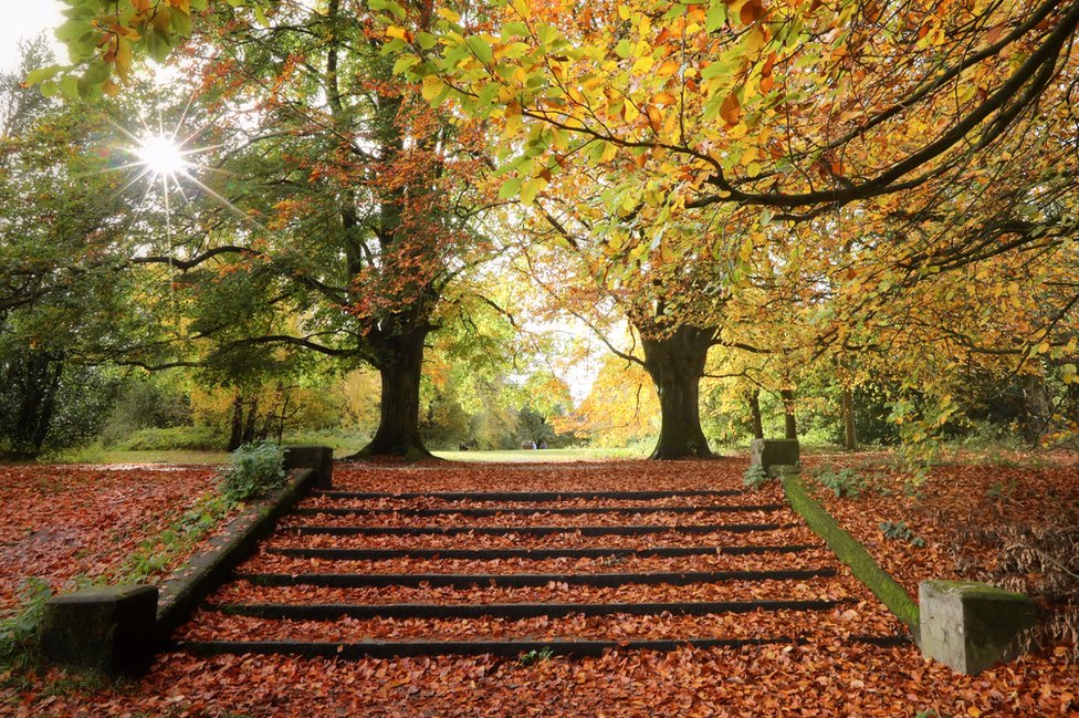 Leaves on stairs in an autumnal photograph