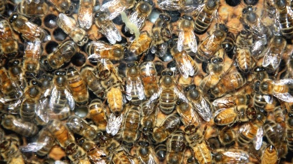 Boy, 3, stung 18 times in Burghfield bee attack
