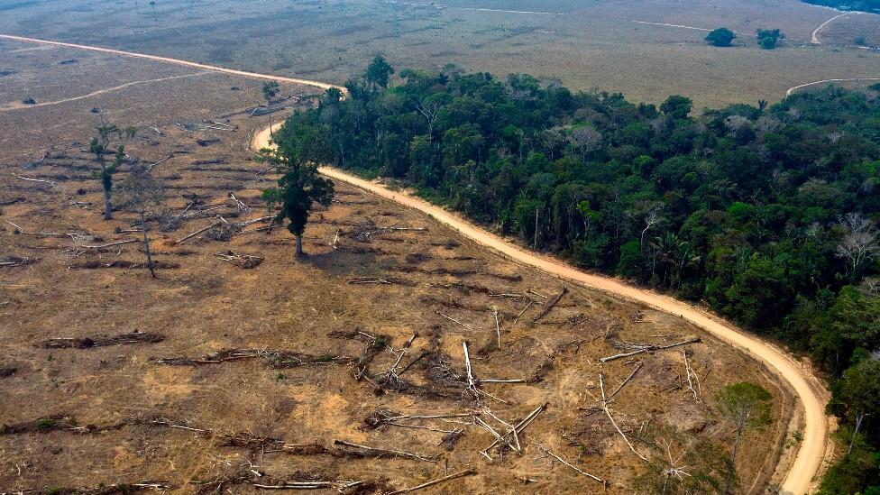 Zona desforestada junto a un área de bosque tropical en la Amazonía