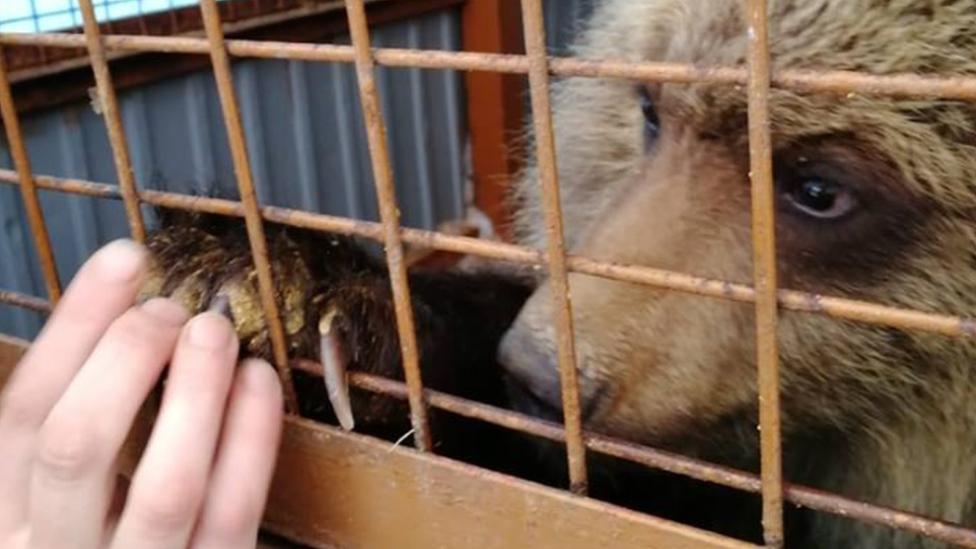 Kisah Mashka Si Beruang Kesepian Yang Ditolak Di Kampungnya