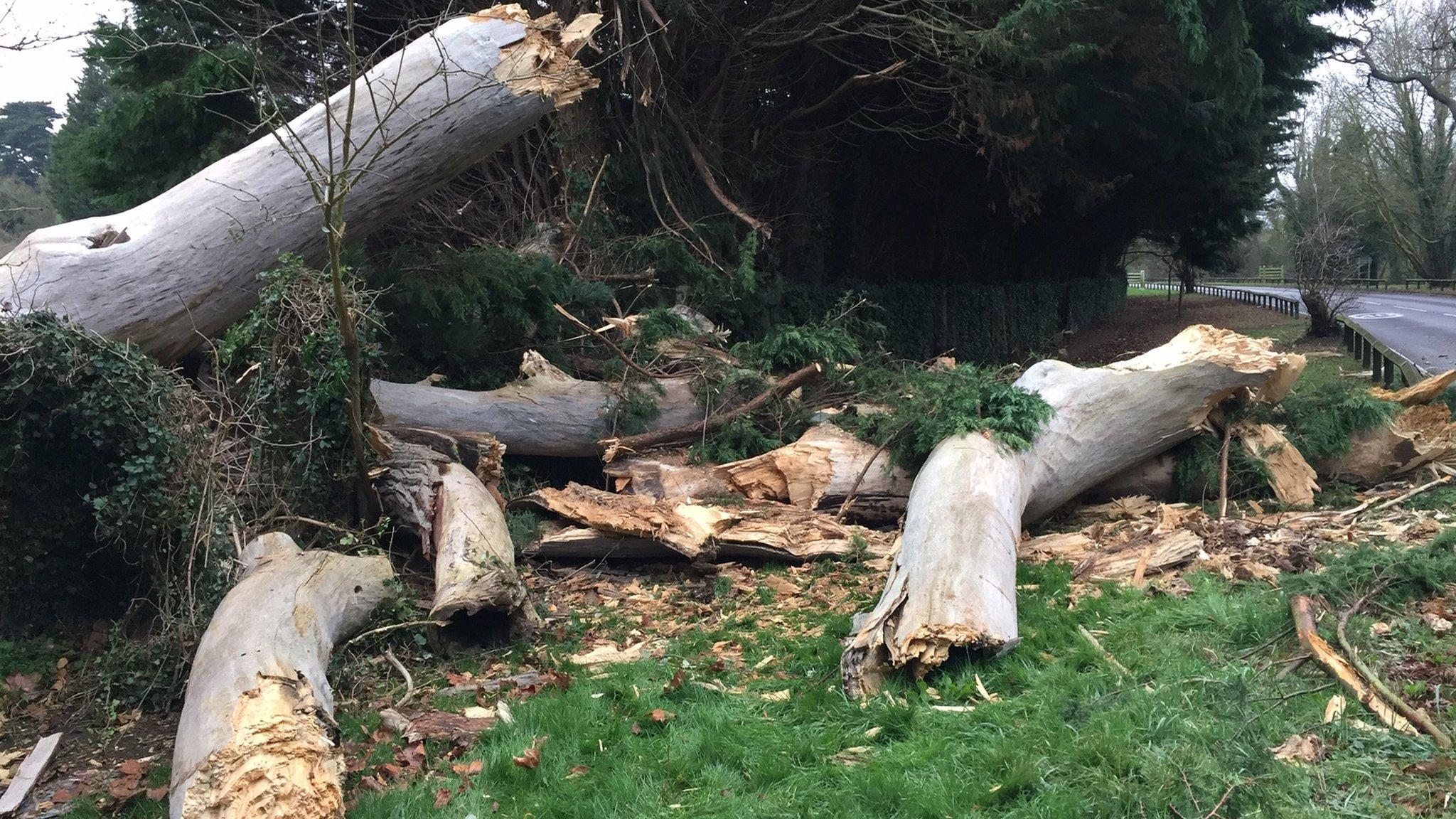 Egham crash: Investigation after passenger crushed by tree
