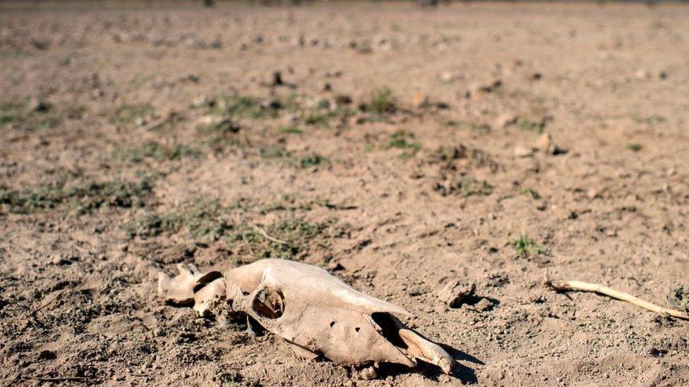 منطقة تعاني الجفاف في تشيلي