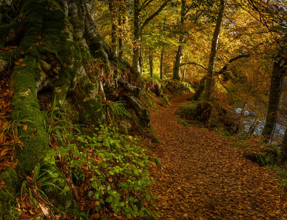 Andy Leonard was taken by the gorgeous autumn colours at the Rocks of Solitude in Edzell.