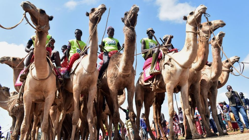 Participants wait the start of the 21 kilometers professional camel race during the 29th edition of Maralal International Camel Derby at Maralal, Samburu County, Northern Kenya on September 2, 2018. - The event held annually, which aims at promoting sports and cultural tourism, is Kenya's best known and prestigious camel race attracting both international and local competitors in amateur and professional categories who breathing life into the remote desert town populated by Kenya's indigenous and pastoral communities including Samburu, Turkana and Pokot tribes. (Photo by ANDREW KASUKU / AFP) (Photo credit should read ANDREW KASUKU/AFP/Getty Images)