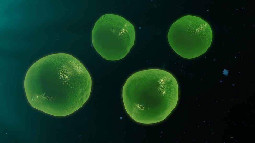 Representación gráfica de linfocitos T.