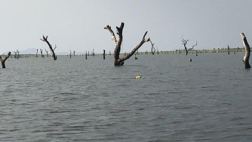 El lago Volta abarca 8.502 kilómetros cuadrados y contiene vastas extensiones de maderas duras africanas preservadas.