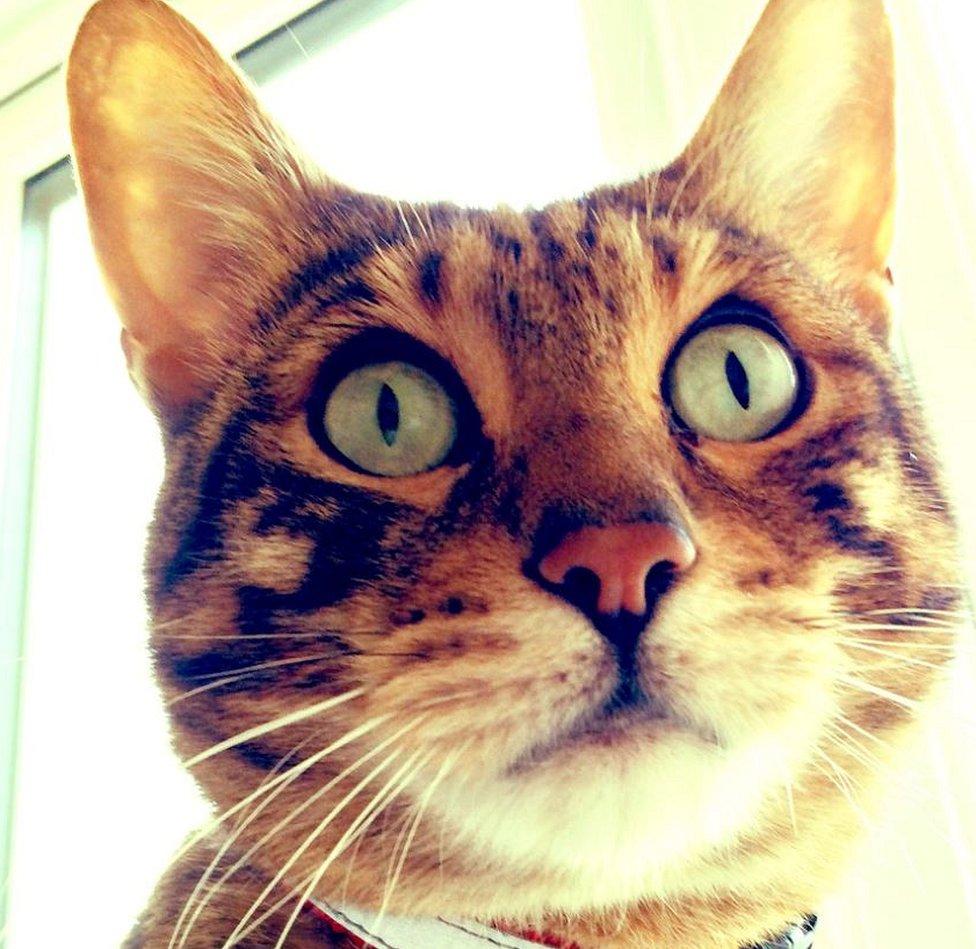 Dougal the cat