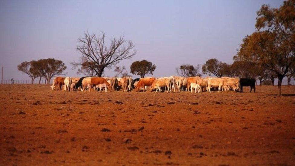 В Австралії небувала посуха, уряд допомагає фермерам