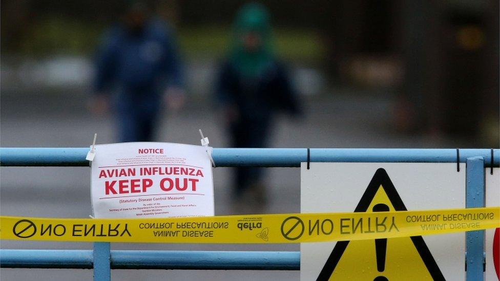 A sign warning of an avian influenza outbreak.