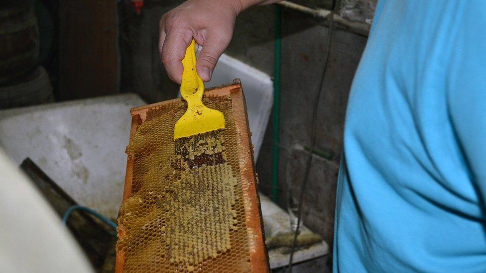 Korona pčelari Marija Raca 2020