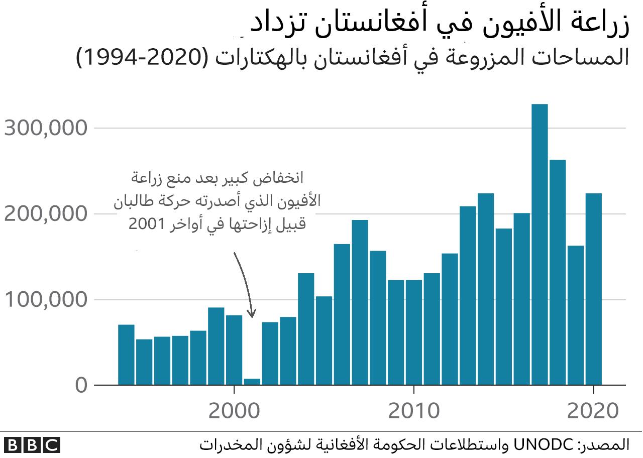 زراعة الأفيون في أفغانستان في تزايد