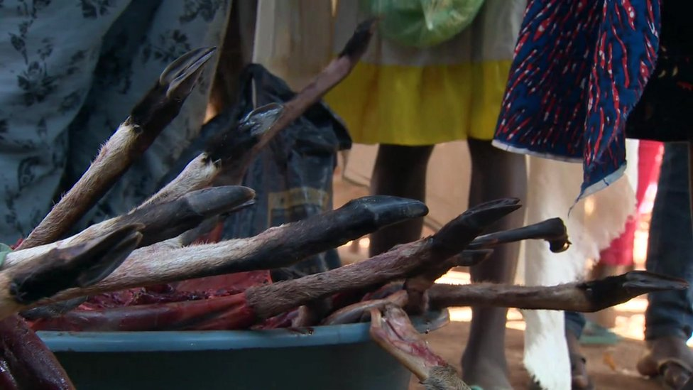 Bushmeat for sale at market in Angola June 2016