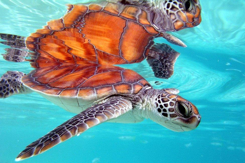 Tetiaroa i obližnji atoli su utočište za divlje životinje