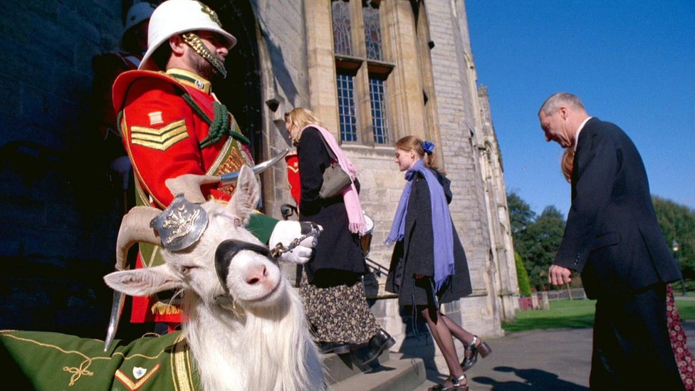 Shenkin the goat at Cardiff Castle in March 2000