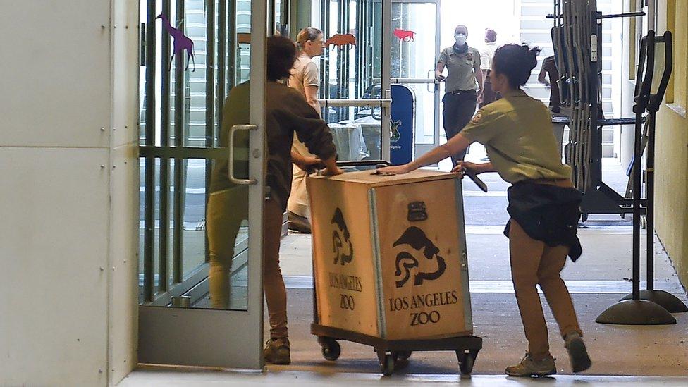 Radnici zoo vrta guraju kutije sa životinjama