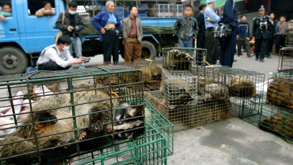 Oficiales del gobierno confiscan gatos de civeta en el mercado de vida silvestre Xinyuan en Guangzhou para prevenir la propagación de la enfermedad del SARS en 2004
