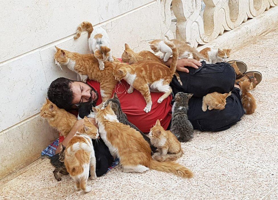 Muhamed Aldžalil prekriven mačkama