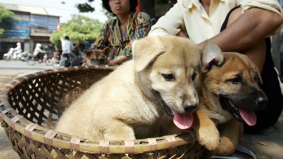 Dos cachorros a la venta en Hanoi en octubre de 2005.