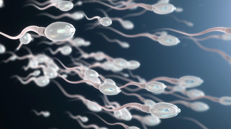 Illustration of sperm