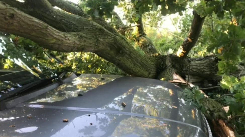 Tree on car in Trowell
