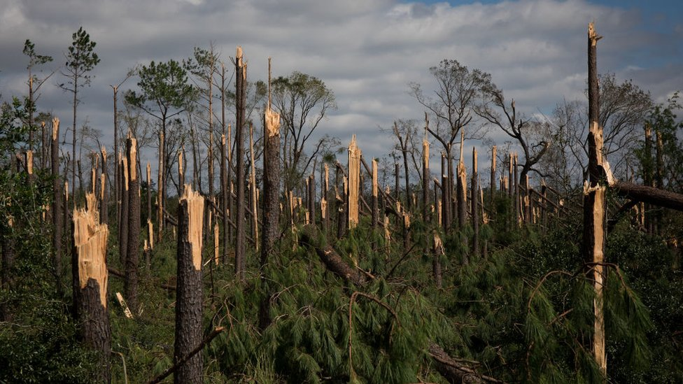 Inland trees were snapped by winds in Marianna