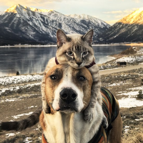 Dog And Cat Walking Together