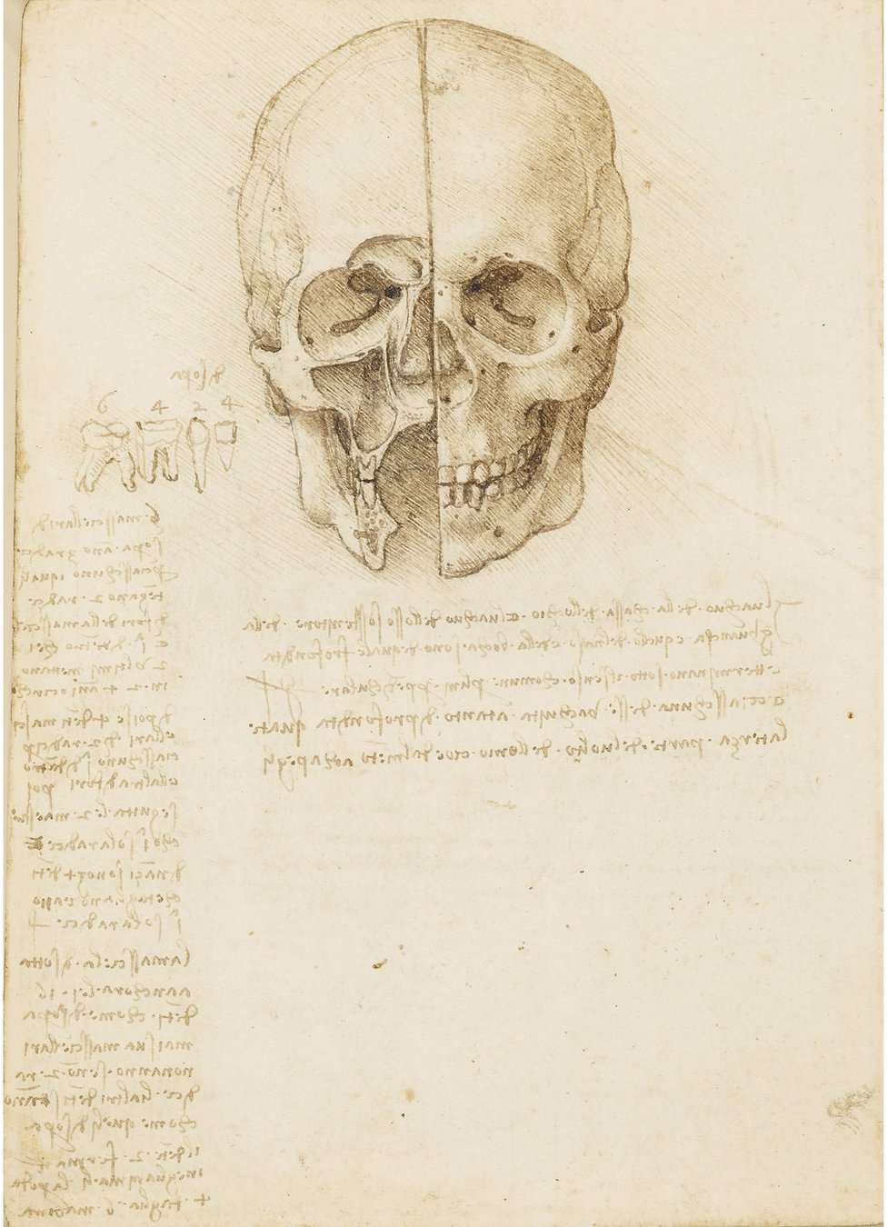 An anatomical drawing of a skull by Leonardo da Vinci