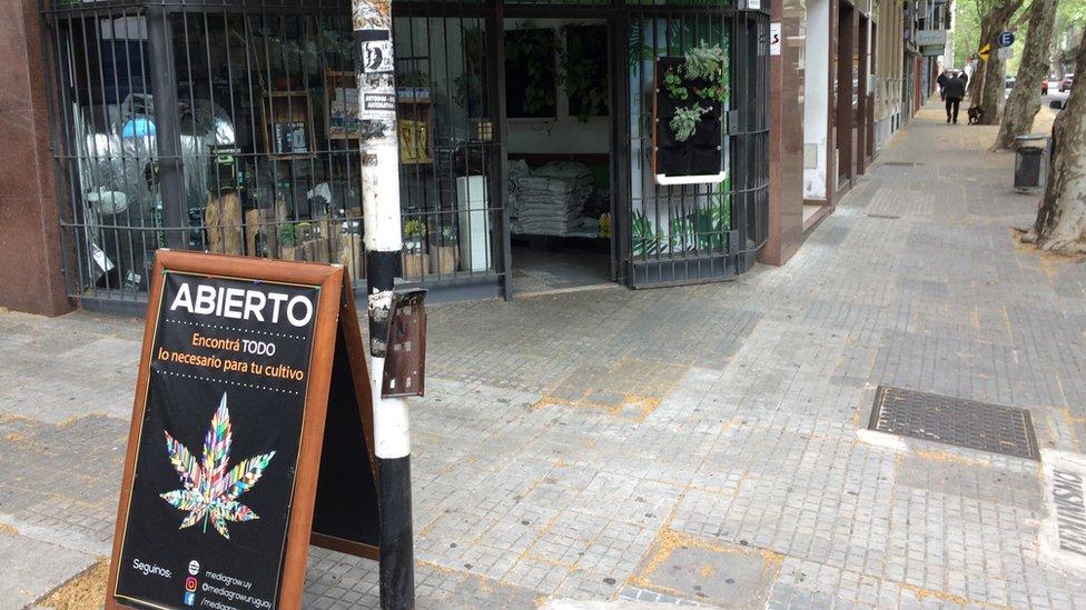 Comercio dedicado a abastecer a cultivadores de marihuana en Montevideo.