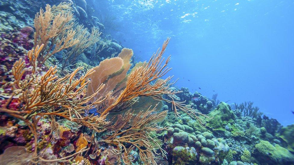 Barrera de Coral.