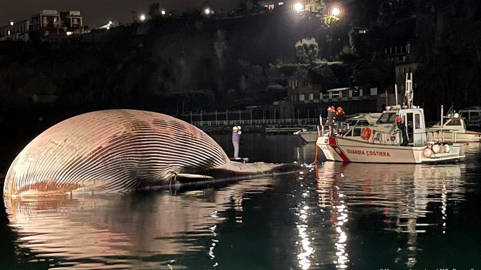 Image shows a coastguard bot next to the whale