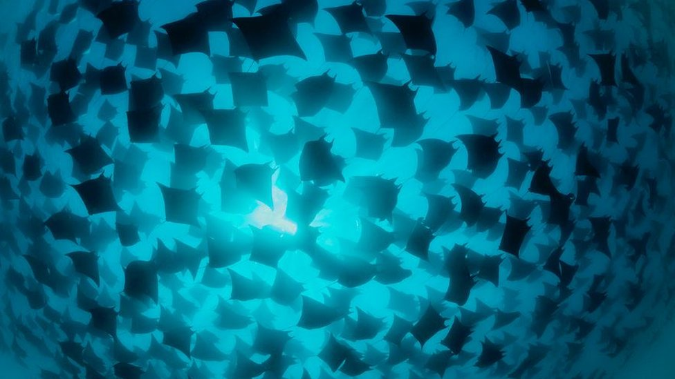 A group of fish swimming together