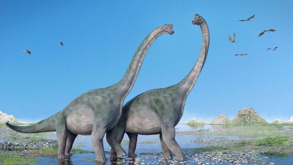 Dos ejemplares de Branchiosauro