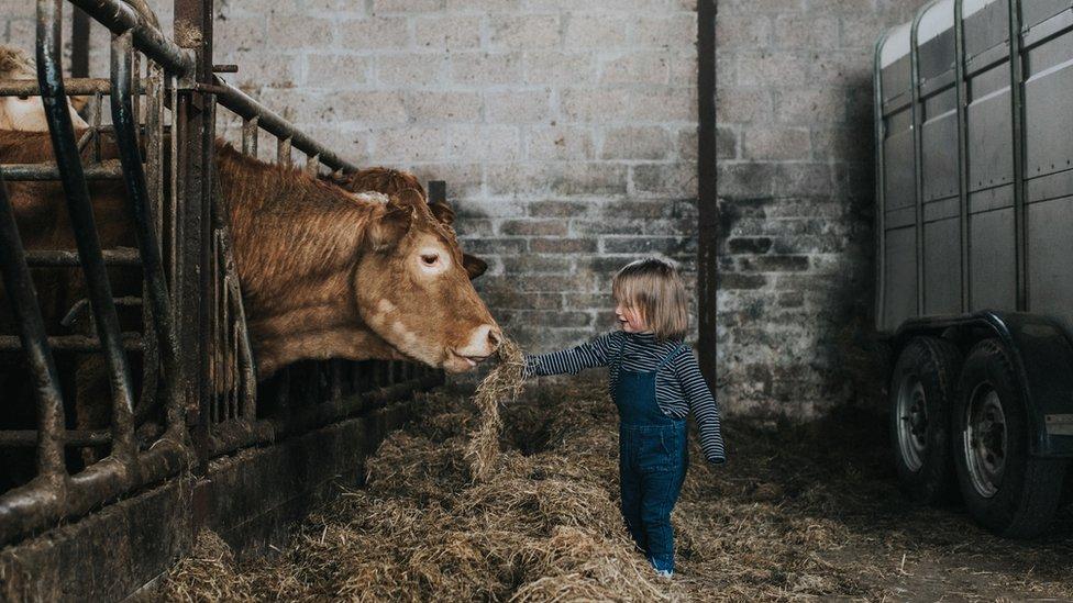 Niña en un establo con una vaca